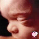 الأسبوع الثالث والعشرون من الحمل